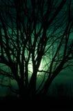 Απόκοσμο δέντρο Στοκ Φωτογραφία