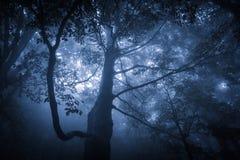 Απόκοσμο misty βροχερό δάσος Στοκ εικόνες με δικαίωμα ελεύθερης χρήσης