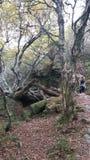 Απόκρημνο δέντρο Στοκ Εικόνες