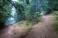 απόκρυφα δάση Στοκ Εικόνα