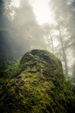 Απόκρυφα δάση Στοκ Φωτογραφία