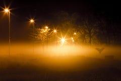 Απόκρυφη νύχτα με ένα πουλί που πετά στον τάφο Στοκ φωτογραφίες με δικαίωμα ελεύθερης χρήσης