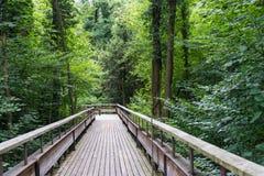 Απόκρυφη ξύλινη πορεία στο δάσος Στοκ εικόνες με δικαίωμα ελεύθερης χρήσης