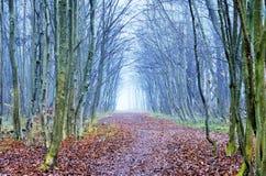 Απόκρυφο δάσος με μια πορεία στοκ φωτογραφίες