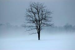 απόκρυφο δέντρο Στοκ Εικόνες