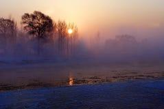 απόκρυφο δέντρο Στοκ εικόνες με δικαίωμα ελεύθερης χρήσης