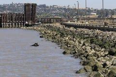 Απόμακρη πιθανότητα μιας αποβάθρας σε βόρεια Καλιφόρνια Στοκ φωτογραφία με δικαίωμα ελεύθερης χρήσης