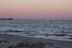Απόμερος γλάρος μετά από το ηλιοβασίλεμα στο σημείο Milford, Κοννέκτικατ στοκ φωτογραφία