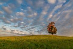 Απόμερος σφένδαμνος στα χρώματα φθινοπώρου στοκ φωτογραφίες με δικαίωμα ελεύθερης χρήσης