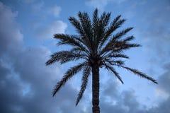 Απόμερος φοίνικας με τα ξηρά φύλλα που στέκονται ψηλά κάτω από το νεφελώδη μπλε ουρανό Μεγάλος φολιδωτός κατασκευασμένος κορμός τ στοκ φωτογραφία με δικαίωμα ελεύθερης χρήσης