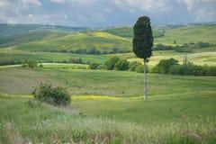 Απόμερο δέντρο κυπαρισσιών στο Tuscan τοπίο στοκ εικόνα