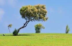 Απόμερο δέντρο στη χλόη Στοκ εικόνα με δικαίωμα ελεύθερης χρήσης