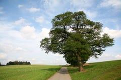 απόμερο δέντρο λόφων στοκ φωτογραφία