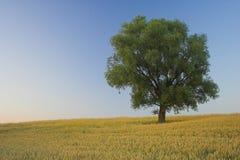 απόμερο δέντρο Στοκ Εικόνες