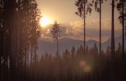 απόμερο δέντρο Στοκ εικόνα με δικαίωμα ελεύθερης χρήσης