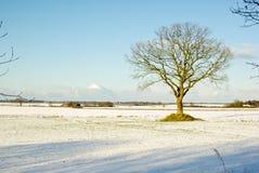 απόμερο δέντρο Στοκ φωτογραφία με δικαίωμα ελεύθερης χρήσης