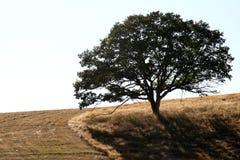 απόμερο δέντρο Στοκ Φωτογραφία
