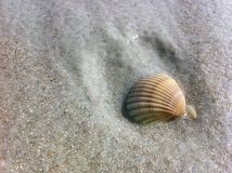 Απόμερο κοχύλι στην υγρή άμμο Στοκ Εικόνες