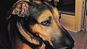 Απόμερο σκυλί απεικόνιση αποθεμάτων