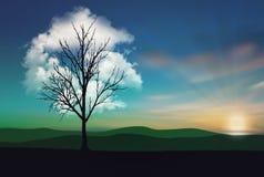 Απόμερο σύννεφο δέντρων στο ηλιοβασίλεμα στοκ εικόνες