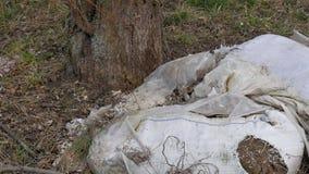 Απόρριψη απορριμάτων κοντά στα δέντρα οικολογική περιβαλλοντική ρύπανση φωτογραφιών κρίσης απόθεμα βίντεο
