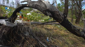 Απόρριψη απορριμάτων στη δασική, περιβαλλοντική ρύπανση, δάσος, δέντρα φιλμ μικρού μήκους