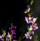 Απόσπασμα καρτών λουλουδιών Στοκ Εικόνα