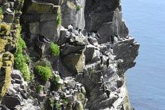 Απότομοι βράχοι θαλασσοπουλιών Latrabjarg Στοκ εικόνα με δικαίωμα ελεύθερης χρήσης