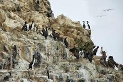 Απότομοι βράχοι κοντά σε Pucusana, Περού Στοκ φωτογραφίες με δικαίωμα ελεύθερης χρήσης