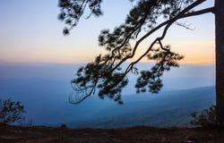 Απότομος βράχος δέντρων πεύκων Στοκ Εικόνες