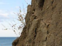 Απότομος βράχος αργίλου κοντά στη θάλασσα Στοκ Εικόνα