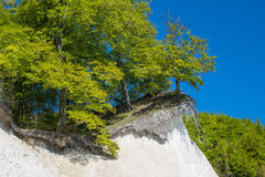 Απότομος βράχος κιμωλίας στο νησί Ruegen Στοκ Φωτογραφία