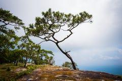 Απότομος βράχος πεύκων Στοκ φωτογραφία με δικαίωμα ελεύθερης χρήσης