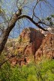 Απότομος βράχος του εθνικού πάρκου Zion στοκ εικόνα