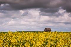 Απόψεις λιβαδιών και καταπληκτικοί ουρανοί Στοκ Εικόνες