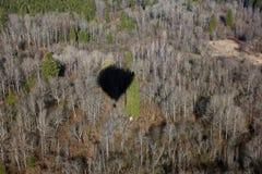 Απόψεις του δάσους από την άποψη ματιών πουλιών από ένα μπαλόνι α ζεστού αέρα Στοκ Φωτογραφία