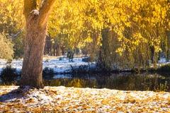 Απόψεις του πάρκου φθινοπώρου με τα κίτρινα φύλλα στο χιόνι στις ακτίνες ήλιων και τη γέφυρα ποταμών Στοκ φωτογραφία με δικαίωμα ελεύθερης χρήσης