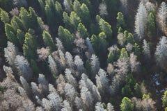 Απόψεις του τομέα και του δάσους και των δέντρων έλατου από την άποψη ματιών πουλιών Στοκ Εικόνες
