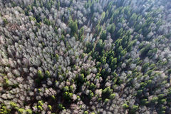 Απόψεις του τομέα και του δάσους και των δέντρων έλατου από την άποψη ματιών πουλιών Στοκ Εικόνα