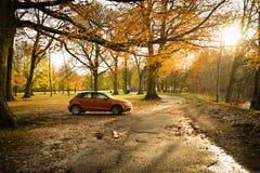 Απόλαυση φθινοπώρου Στοκ εικόνα με δικαίωμα ελεύθερης χρήσης
