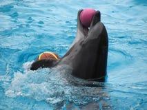 Απόδοση ενός δελφινιού σε ένα aquapark Στοκ εικόνα με δικαίωμα ελεύθερης χρήσης