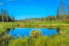 Από την άκρη του δρόμου, οδηγώντας εθνικό πάρκο βουνών, Manitoba, Καναδάς στοκ εικόνα με δικαίωμα ελεύθερης χρήσης