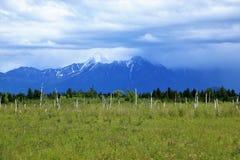 Από την Αλάσκα λιβάδι με τα θαμμένα ή βυθισμένα δέντρα από το σεισμό στοκ φωτογραφίες με δικαίωμα ελεύθερης χρήσης