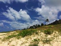 Από την κτυπημένη απομονωμένη πορεία κενή παραλία αμμόλοφων άμμου με τη βλάστηση και τους φοίνικες Στοκ Φωτογραφία