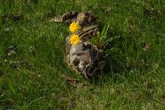 Από το θάνατο έρχεται ζωή Στοκ φωτογραφία με δικαίωμα ελεύθερης χρήσης
