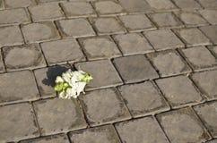 Από το λουλούδι θέσεων στην επίστρωση στοκ φωτογραφία