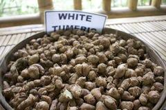 Από το Μπαλί άσπρο tumeric καφέ Luwak Στοκ Εικόνες