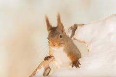 Από το χιόνι Στοκ Φωτογραφίες