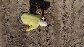 Από το ύψος βλέπουμε πώς ένα πρόσωπο σκάβει τις πατάτες φιλμ μικρού μήκους