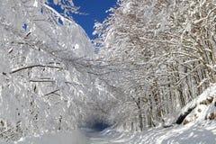 Απλές χιονώδεις διαδρομές ελαστικών αυτοκινήτου - πορτρέτο Στοκ Φωτογραφίες